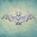 "Молд ""Летучая мышь Вампир 3"" (XS) ARTMD1239"