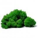 Мох ягель стабилизированный  зеленый 10гр